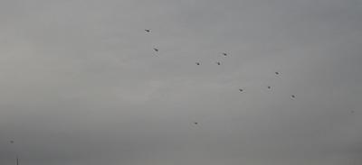 20 ヘリ12機.jpg