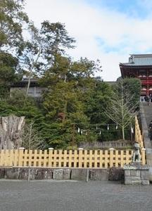 温泉1 鎌倉のイチョウ.jpg